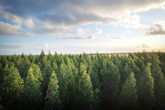 naujienos apie mišką
